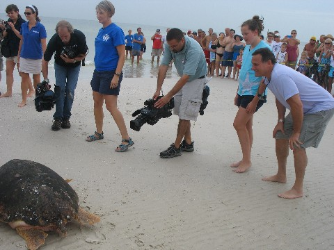 Craig and Isabella Hatkoff release Betsie the sea turtle